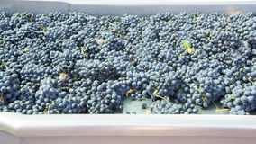 Grapes for selection Royalty Free Stock Photos