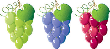 Grapes set. Grapes of various grades set. Green, dark blue and red.  Isolated on a white background. Vector will be aditional Royalty Free Stock Images