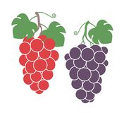 Grapes set. Isolated grapes on white background. EPS 10. Vector illustration Royalty Free Stock Photo