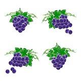 Grapes set. Vector Royalty Free Stock Photography