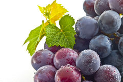 Grapes,. Shot in white back with a grape leaf ripe Royalty Free Stock Photo