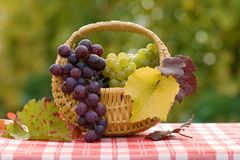 Grapes in small basket Royalty Free Stock Images