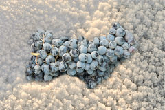 Grapes in snow Royalty Free Stock Image