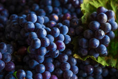 Grapes. Some fresh grapes and leaves royalty free stock images