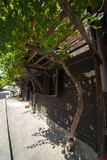 Grapes on the street of the old town of Sozopol in Bulgarian Royalty Free Stock Image