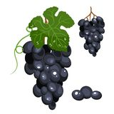 Grapes stylized isolated illustration, bright cartoon color. stock illustration