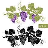 The grapes are symbols. Template. Vector isolated signs. Isolated white background Stock Image