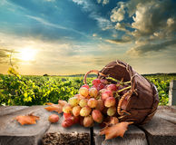 Grapes on table Stock Images