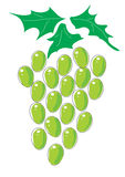 Grapes.Vector. Vector image of grapes on white Royalty Free Stock Image
