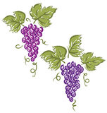 Grapes (Vector) Stock Photo