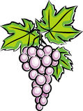 Grapes (Vector) Royalty Free Stock Image