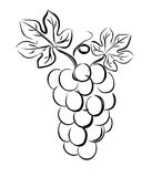 Grapes vector Stock Image