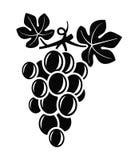 Grapes vector royalty free illustration