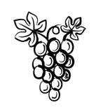 Grapes vector Stock Photo