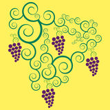 Grapes in vector format stock images