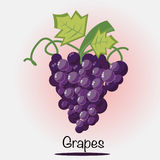 Grapes Vector.Fruits and vegetables. Vector EPS of Grapes Fruits Stock Photos