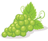 Grapes vector illustration Royalty Free Stock Photos