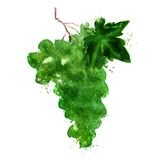 Grapes vector logo design template. fruit or food Royalty Free Stock Photos