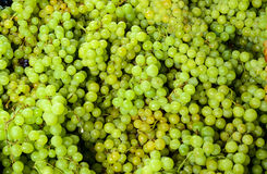 Grapes in vegetable market for sale Stock Photo