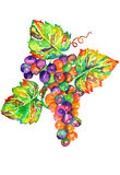 Grapes. Vibrant watercolor grape cluster and leaves Stock Photos
