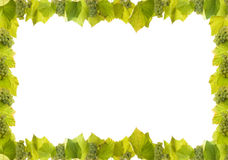 Grapes and vine border Royalty Free Stock Images