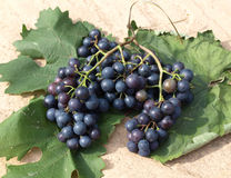 Grapes on vine leaves Royalty Free Stock Photo