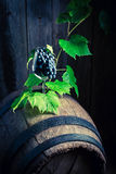 Grapes and vines in a glass of wine on an old barrel. Grapes and vines in a glass of wine on an old wooden barrel Stock Images