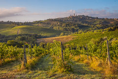Grapes and Vines near Tuscan Village Stock Images