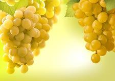 Grapes and vineyard Stock Photo