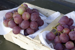 Grapes in vineyard in France Stock Photos