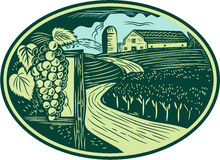 Grapes Vineyard Winery Oval Woodcut Royalty Free Stock Images