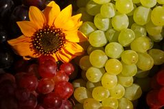 Grapes in Vintage Fruit Box royalty free stock photo