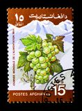 Grapes (Vitis sp.), World Food Day serie, circa 1984. MOSCOW, RUSSIA - DECEMBER 21, 2017: A stamp printed in Afghanistan shows Grapes (Vitis sp.), World Food Day Stock Image
