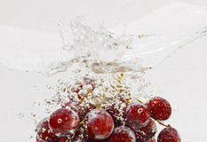 Grapes in water Stock Photography