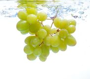 Grapes in the water Royalty Free Stock Image