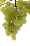 Grapes in water on white background Royalty Free Stock Photography