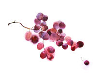 Grapes, watercolor Stock Photos