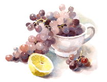 Grapes Watercolor Food Illustration Hand Painted Royalty Free Stock Image