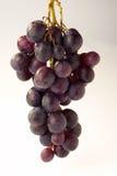 Grapes - Weintrauben. Grapes on white Background - Weintrauben vor weissem Hintergrund royalty free stock photography