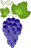 Grapes on the white royalty free stock photos