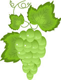 Grapes on the white Stock Image