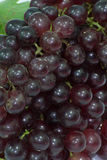 Grapes. On a white background Royalty Free Stock Images