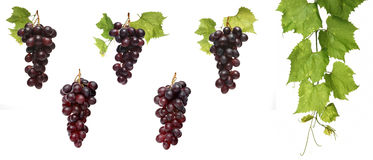 Grapes on white background - close-up stock images