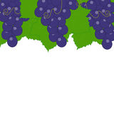 Grapes on a white background. Royalty Free Stock Images