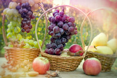 Grapes in wicker basket. Autumn harvest, seasonal fruits Royalty Free Stock Images