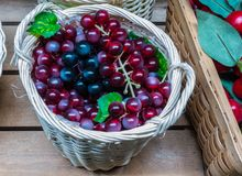 The grapes  in a wicker basket. Collection of grapes with leaves in a wicker basket Royalty Free Stock Image