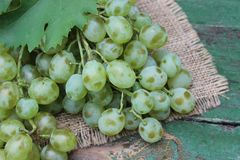 Grapes in a wicker basket Royalty Free Stock Photos