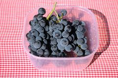 Grapes wild vine. Wild grape vine photographed in a plastic bowl on a table covered with a linen sheet Stock Images