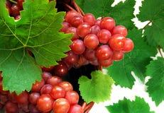 grapes wine 库存图片