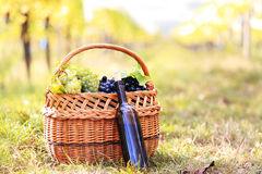 Grapes and wine bottle Royalty Free Stock Photos